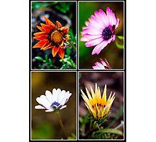 flower blocks Photographic Print
