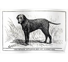 All about dogs a book for doggy people Charles Henry Lane 1900 0093 Curly Retriever_jpg Poster