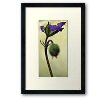 Petals Unfolding - Wild Geranium Framed Print