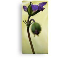 Petals Unfolding - Wild Geranium Canvas Print