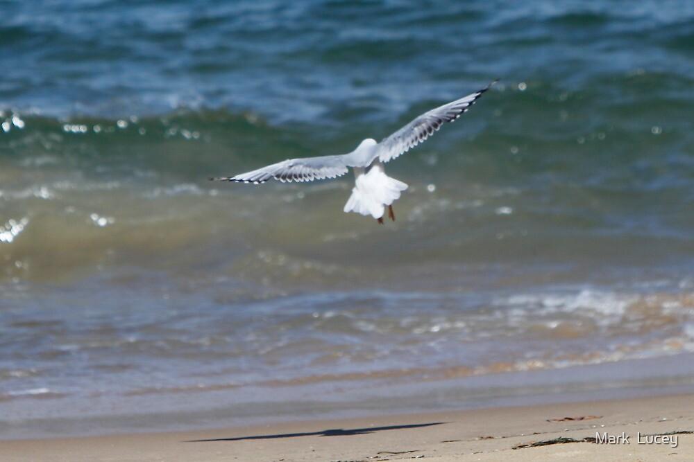 Beach Landing by Mark  Lucey