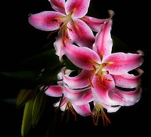 Star Lily by Jeffrey  Sinnock