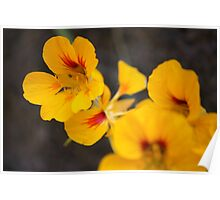 Yellow Flowers 1327 Poster