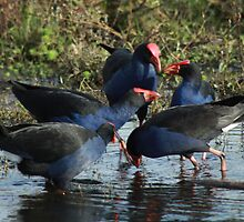 Pukeko Party by theherneschase