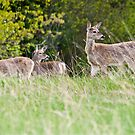 Three Little Dears by Tracy Riddell