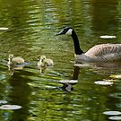 Mom and Goslings by Tracy Riddell