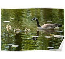 Mom and Goslings Poster