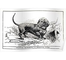 All about dogs a book for doggy people Charles Henry Lane 1900 0121 Dachshund_jpg Poster