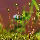 Drops of Inspiration by Terra 'Sunshine' Gilbert