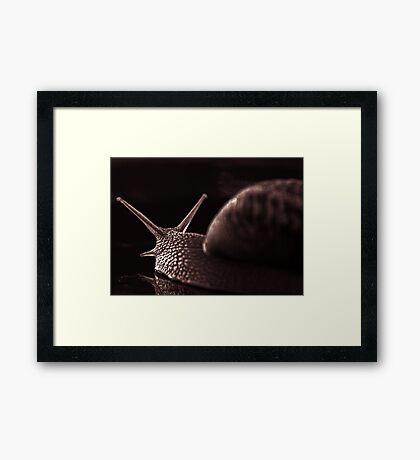 snail monochrome Framed Print