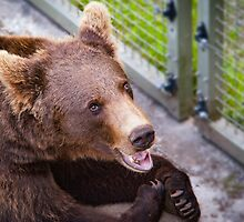 Hot bear by kennethmlgaard