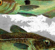 Haddock & Cod illustration Sticker