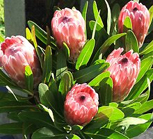 Proteas (6472) by ScenerybyDesign