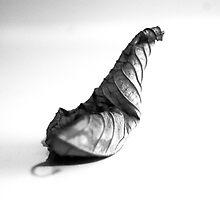 LEAF SER.3 (snail) by Paul Quixote Alleyne