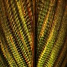 Calla Leaf by Annie Lemay  Photography