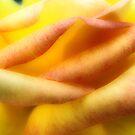Rose Petal Landscape by shutterbug2010