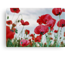 Field of Poppies Against Grey Sky  Canvas Print