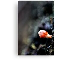 Small World Of Red Canvas Print