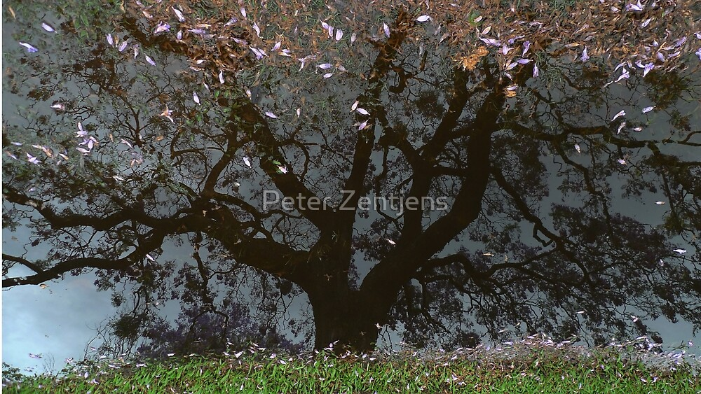 Grafton - after - the - rain by Peter Zentjens