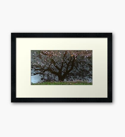 Grafton - after - the - rain Framed Print