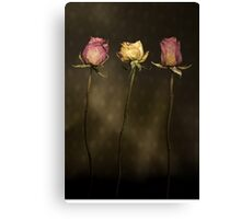 3 Roses Canvas Print