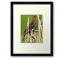 Young Dragonfly Slayer Framed Print