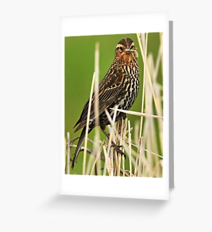 Young Dragonfly Slayer Greeting Card