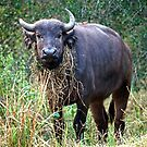 Female Buffalo With Necklace by Michael  Moss