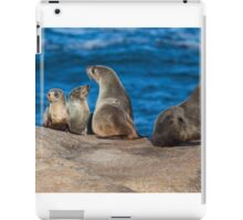 Australian Fur Seals iPad Case/Skin