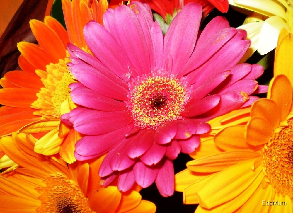 Bouquet of Gerberas- a gift by EdsMum