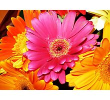 Bouquet of Gerberas- a gift Photographic Print