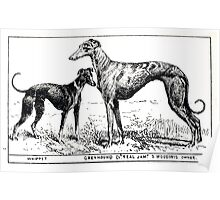 All about dogs a book for doggy people Charles Henry Lane 1900 0127 Whippet_jpg Poster