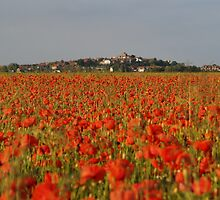 Poppys - Winchelsea, 2009 by Dan Bevan Photography