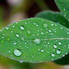 Rainy Days by vbk70