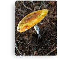 Orange Cap Canvas Print