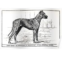 All about dogs a book for doggy people Charles Henry Lane 1900 0067 Great Dane_jpg Poster