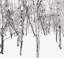 Snow Woodland - Niseko, Japan by Bartt
