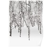 Snow Woodland - Niseko, Japan Poster