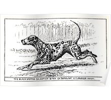 All about dogs a book for doggy people Charles Henry Lane 1900 0189 The Black Spotted Dalmatian Bitch_jpg Poster