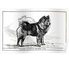 All about dogs a book for doggy people Charles Henry Lane 1900 0327 Chow Chow_jpg Poster