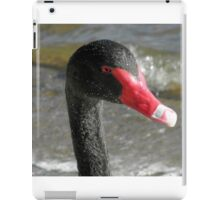 Black Swan with Water Droplets, Canberra, Australia. iPad Case/Skin