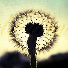 Dandelion Dreams by Claire Elford