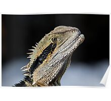 Dragons are real Poster