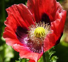 wildflower by LeeDukes