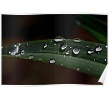 Waterdrops.... Poster