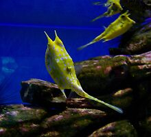 UShaka Aquarium - Yellow Fish by CharziG