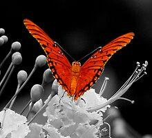 orange ascent by GuyAmazed