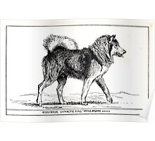 All about dogs a book for doggy people Charles Henry Lane 1900 0323 Esquimaux or Eskimo_jpg Poster