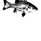 Australian Bass by garts
