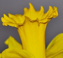 Narcissus by marco10